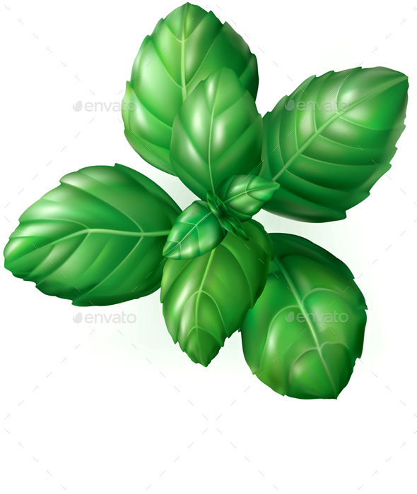 Basil Leaves - Food Objects