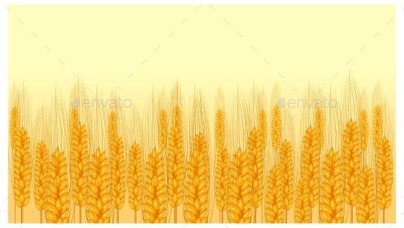 Ear Wheat on Yellow  - Food Objects