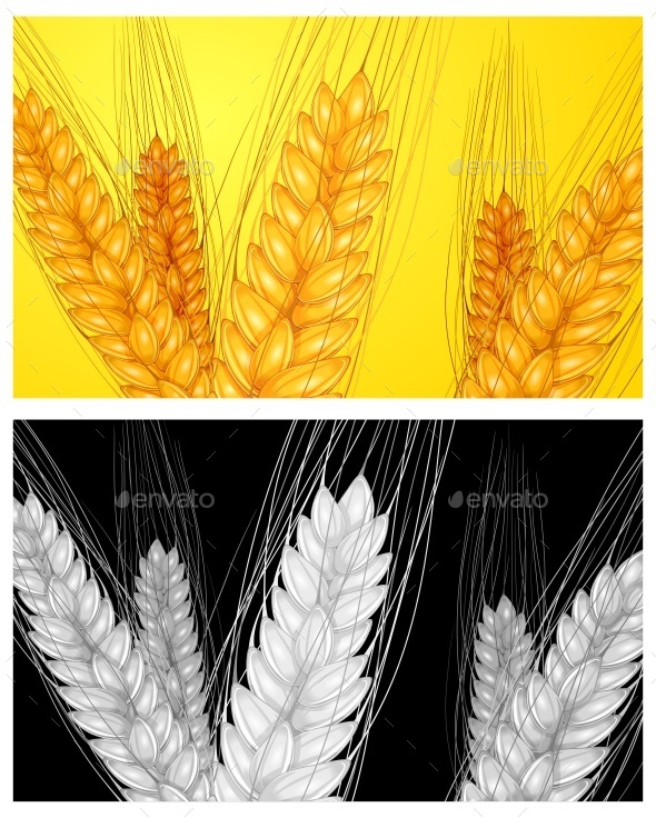 Ear Wheat Background  - Food Objects