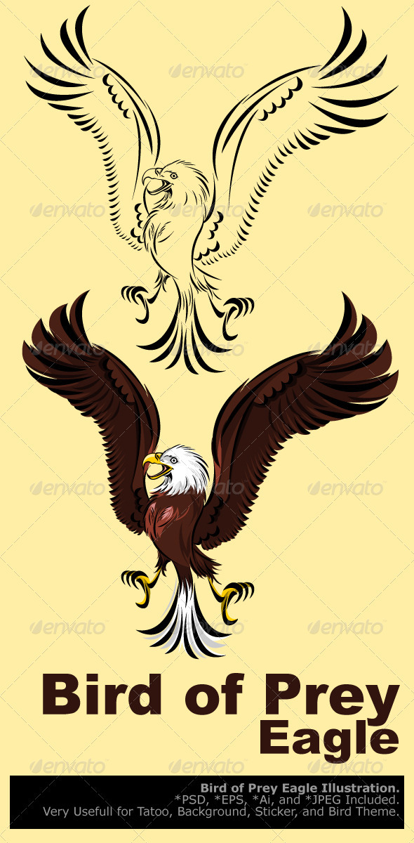 Bird of Prey Eagle - Animals Characters