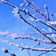 Frost on the Branches of Trees 1 - VideoHive Item for Sale