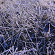 Grass Covered with Frost 1 - VideoHive Item for Sale