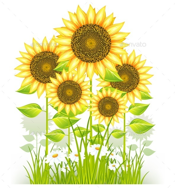 Sunflowers and Grass - Miscellaneous Vectors