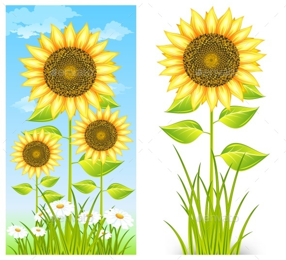 Sunflowers on Blue - Miscellaneous Vectors