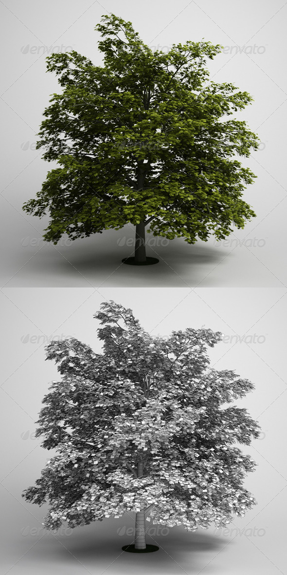 CGAxis Tree Norway Maple 03 - 3DOcean Item for Sale
