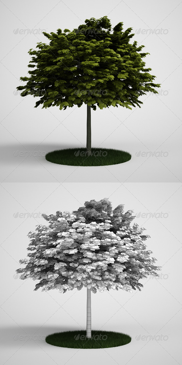 CGAxis Tree Norway Maple 04 - 3DOcean Item for Sale
