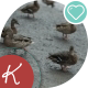 Lots Of Ducks On The Shore - VideoHive Item for Sale