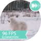 The White Dog Running In The Snow Nearby Stands - VideoHive Item for Sale