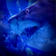 Huge Shark Swims Past Very Close - VideoHive Item for Sale