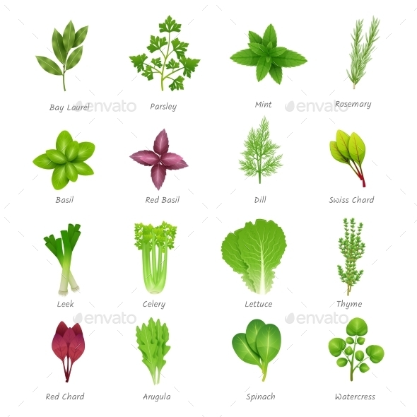 Herbs Icons Set - Food Objects