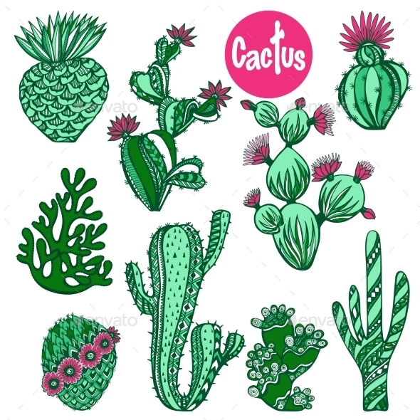 Color Cactus Set - Nature Conceptual