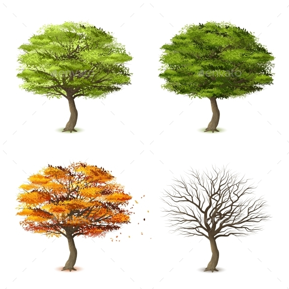 Trees In Four Seasons - Nature Conceptual