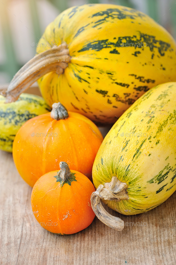 Pumpkins on wooden background - Stock Photo - Images