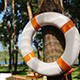 Lifebuoy on Tree - VideoHive Item for Sale