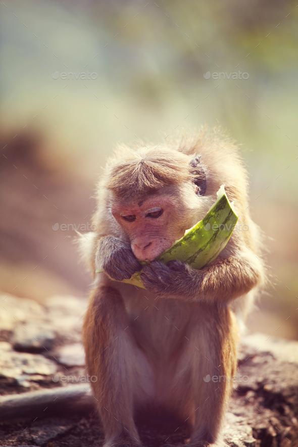 Monkey - Stock Photo - Images