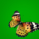 Butterfly on Green Background 2 - VideoHive Item for Sale