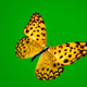 Butterfly on Green Background 4 - VideoHive Item for Sale