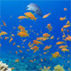 Underwater Colorful Tropical Fishes and Beautiful Corals - VideoHive Item for Sale