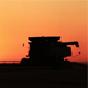 Wheat Harvest at Sunset - VideoHive Item for Sale