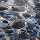 Sea Waves on Stones - VideoHive Item for Sale