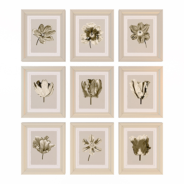 Charlotte Morgan Watercolour Tulips Sepia Nine Piece - 3DOcean Item for Sale
