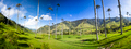 Cocora valley with giant wax palms  near Salento, Colombia - PhotoDune Item for Sale