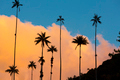 Sunset on the Cocora valley with giant wax palms  near Salento, - PhotoDune Item for Sale
