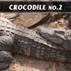 Crocodile No.2 - VideoHive Item for Sale
