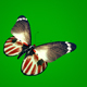 Colorful Butterfly on Green Background - VideoHive Item for Sale