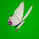 White Butterfly on Green Background - VideoHive Item for Sale