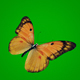 Yellow Butterfly on Green Background - VideoHive Item for Sale
