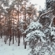 Winter Forest Sunny Day - VideoHive Item for Sale