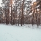 Snowy Softwood Forest - VideoHive Item for Sale