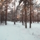 Snowy Forest Aerial Shot - VideoHive Item for Sale