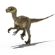 Raptor Running - VideoHive Item for Sale
