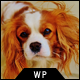 Pet Care Dog Kennels WordPress Theme Nulled