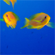 Blue Water Background with Tropical Colorful Fishes - VideoHive Item for Sale