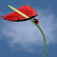 Move the ladybird on the flower stems flamingo Lily - 3DOcean Item for Sale