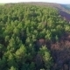 Aerial View Of Pine Forest - VideoHive Item for Sale