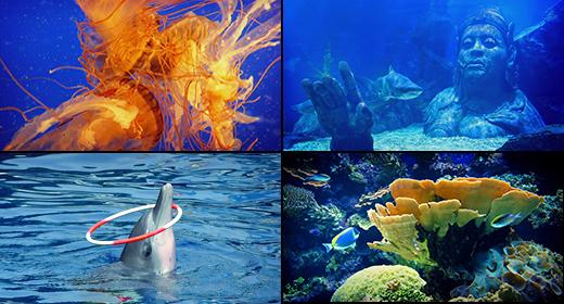 Fish & Ocean Life