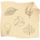 sketch leaves - GraphicRiver Item for Sale
