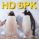 Antarctic Penguin 6 Pack - VideoHive Item for Sale