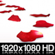 Red Rose Petals - VideoHive Item for Sale