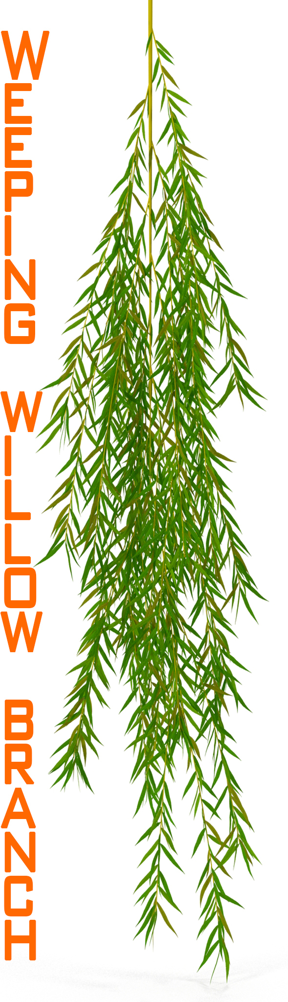Weeping willow branch - 3DOcean Item for Sale