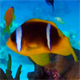 Underwater Colorful Tropical Fishes and Porcupine Fish - VideoHive Item for Sale