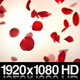 Falling Red Rose Petals Background - VideoHive Item for Sale