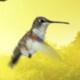 Hummingbird Logo - VideoHive Item for Sale