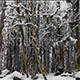 Snowy Forest - VideoHive Item for Sale
