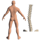 Scoliosis Of The Spine - VideoHive Item for Sale