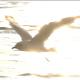Flock Of Birds On Blue Sky - 6